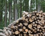 Impuls a la oferta de biomassa local